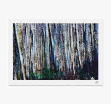 bevægelsesfoto - træer