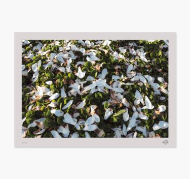 blade i svøb