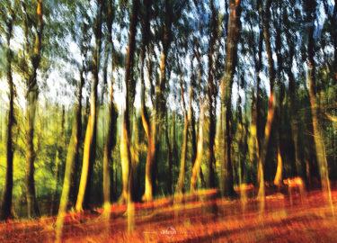 den-tavse-skov 01