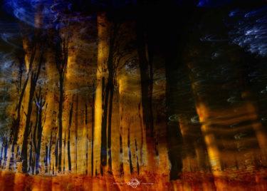 den-tavse-skov 02