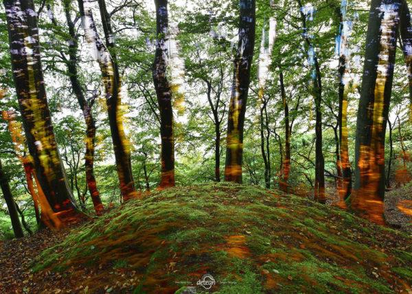 den-tavse-skov 03