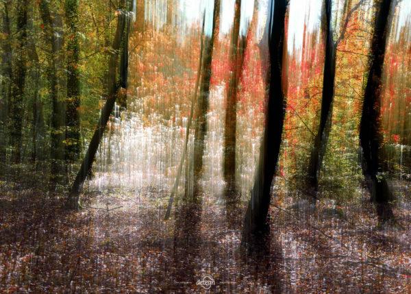 den-tavse-skov 05