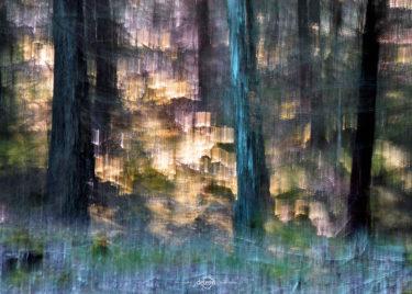 den-tavse-skov 06
