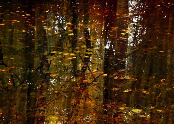 den-tavse-skov 07