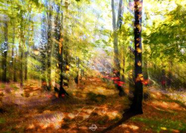 den-tavse-skov 08