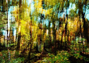 den-tavse-skov 09