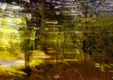 den-tavse-skov 10