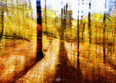 den-tavse-skov 11
