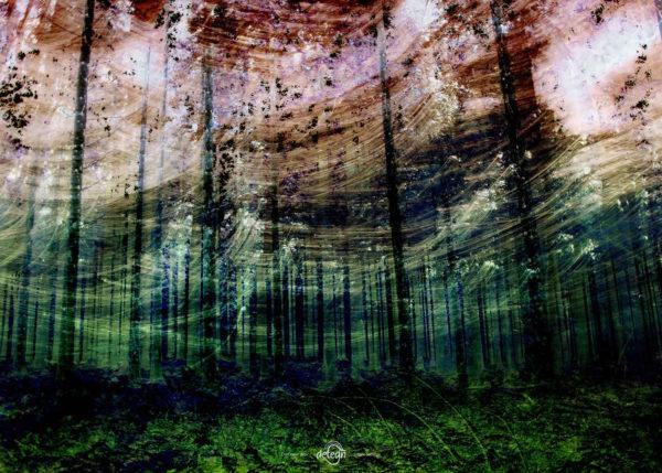 den-tavse-skov 12
