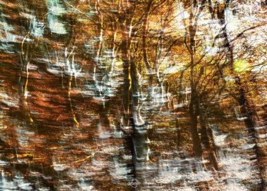 den-tavse-skov 13