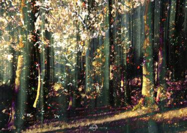den-tavse-skov 14