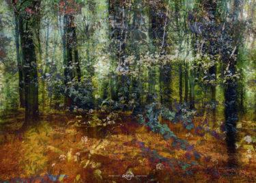 den-tavse-skov 15