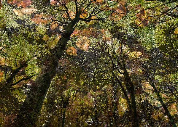 den-tavse-skov 16