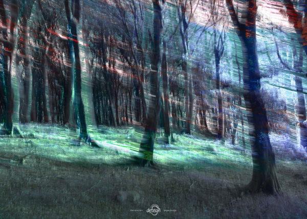 den-tavse-skov 17