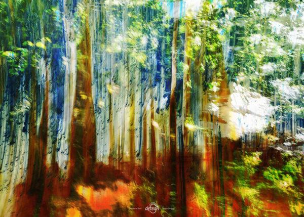 den-tavse-skov 18