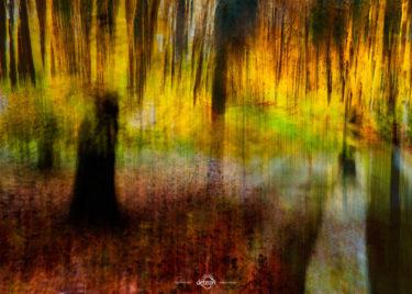 den-tavse-skov 19