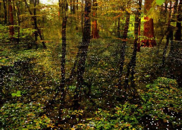 den-tavse-skov 20