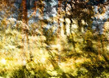 den-tavse-skov 21