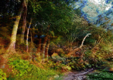 den-tavse-skov 22