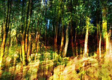 den-tavse-skov 23