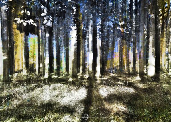 den-tavse-skov 24