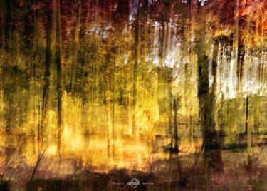 den-tavse-skov 25