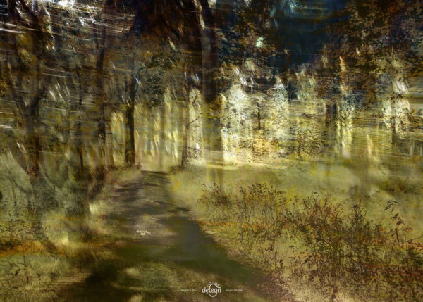 den-tavse-skov 26