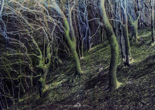 den-tavse-skov 27
