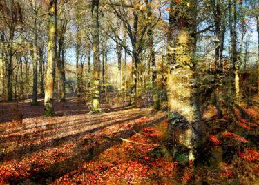 den-tavse-skov 29