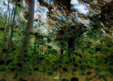 den-tavse-skov 31