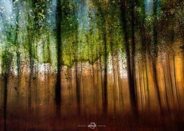 den-tavse-skov 32